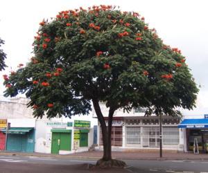 so đỏ cam